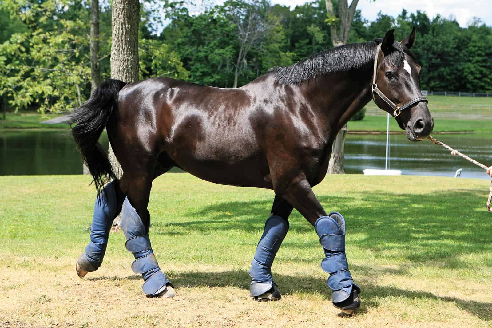Leg and Hoof Protection – The Horse